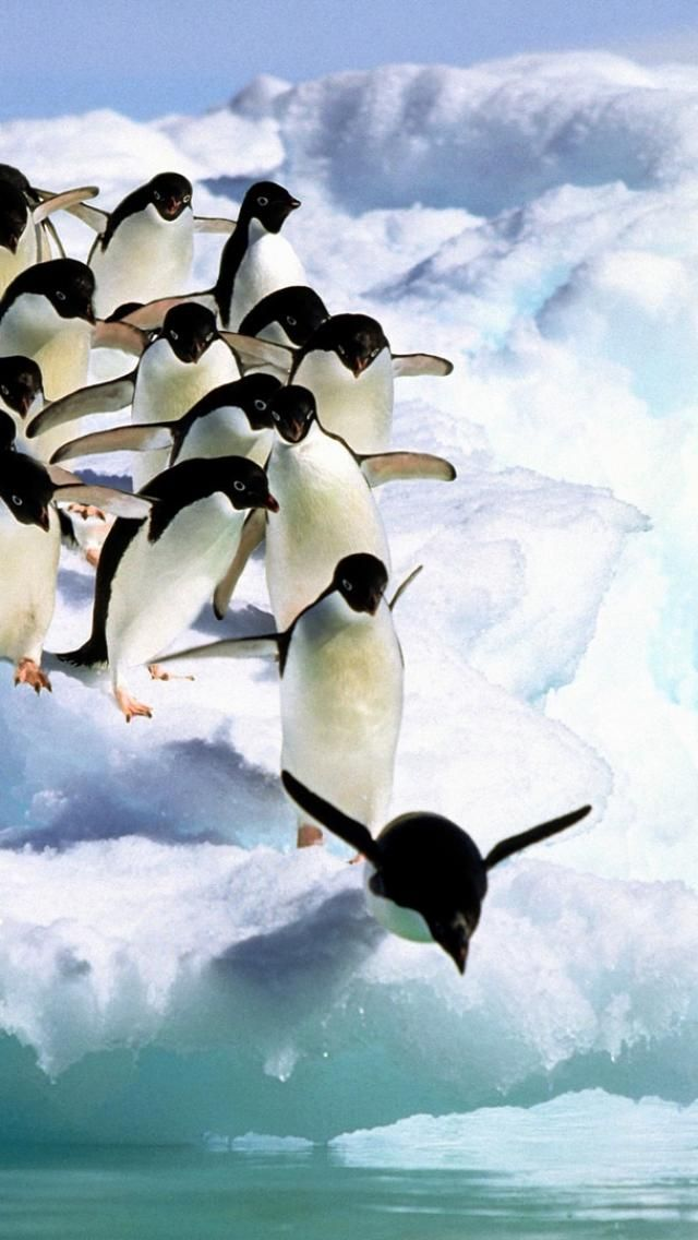 Penguins are amazing and beautiful.