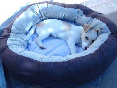 Cuccia Ciambella per Cani e Gatti http://www.principini.it/prodotti/cani/cucce-cani/cuccia-ciambella-cani-gatti