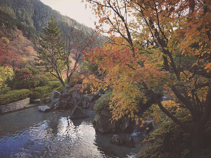 #まだ間に合った箱根の紅葉 #箱根は寒かった #冬の箱根もキレイ #紅葉 #autumnleaves #japan #hakone #zen #maple