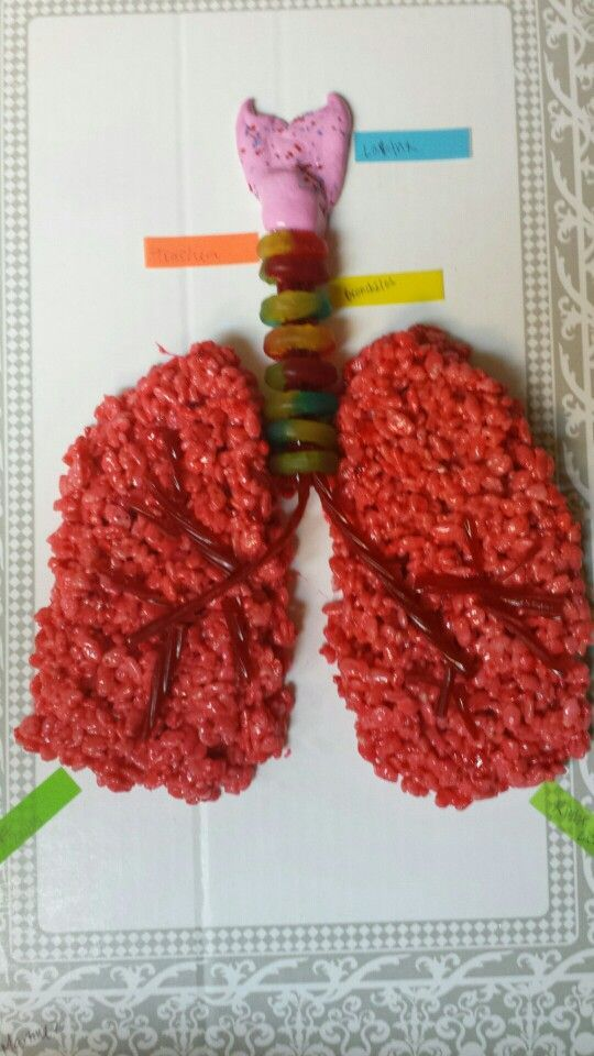 Edible model of the lungs and trachea from Rice Krispie Treats, Twizzlers, Life Savers, and taffy. Image only.