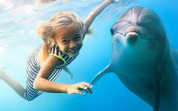 Hai Mai Sognato Di Nuotare Con I Delfini Allora Festeggia I 50