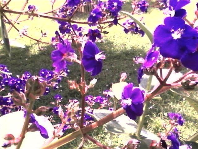 Flores de Puente Palo - Finca Santa Marta