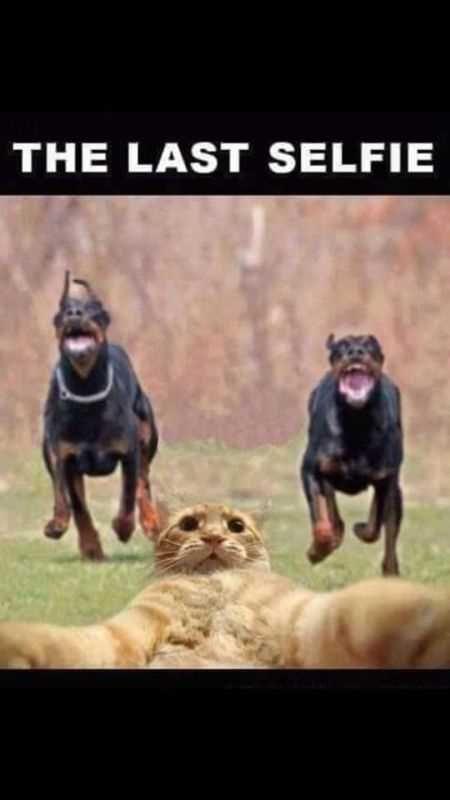 A CATastrophic day for feisty ginger feline 🙀🖤