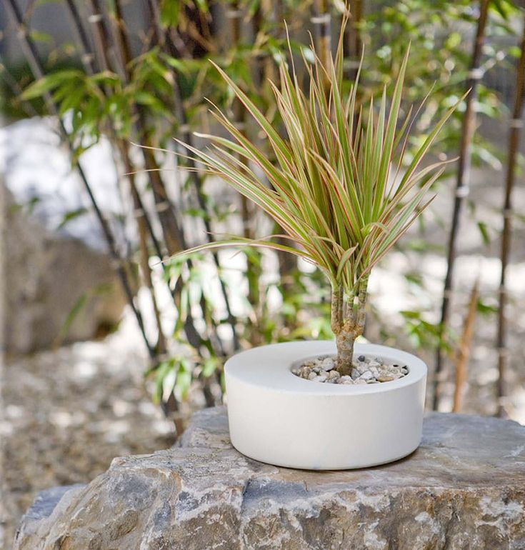Modern Planters 102 best modern planters and pots images on pinterest | modern