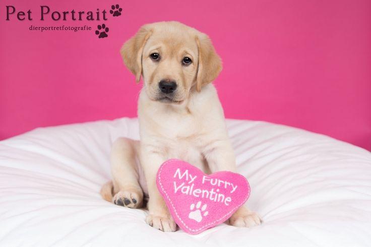 Hondenfotograaf Leiden - Labrador retriever pup Freyja-3