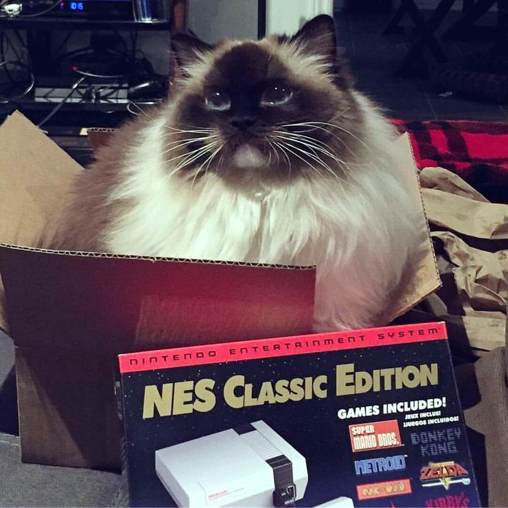 I can play NES Classic please? http://ift.tt/2qhTBS0
