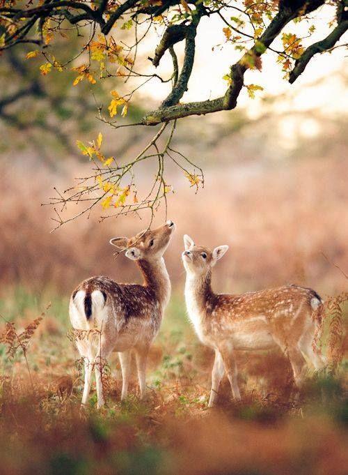 Herfst ook voor deze hertjes :)
