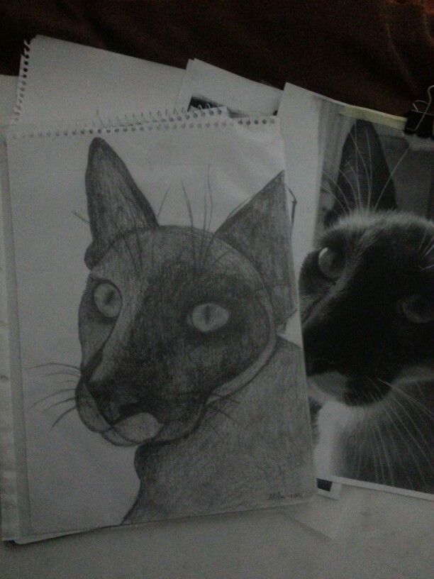 Loki the cat