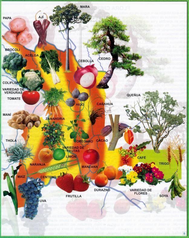 Mapa Flora Del Departamento De Chuquisaca Mapas De Bolivia