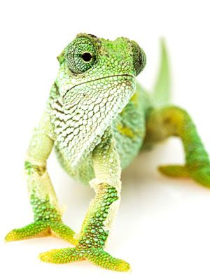 Exotic Pets: The Good, the Bad, and the Unusual In the world of pets, there's plenty more to choose from than your basic dog or cat. In fact, some of the exotic pets on this list are gaining in popularity. But don't forget about their special pet health needs.