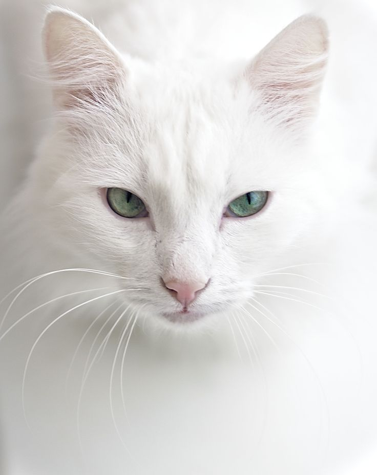 White Cat by Pavel Zilke on 500px