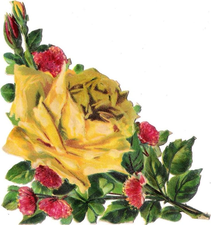 Oblaten Glanzbild scrap die cut  chromo  Rose  16,5 cm  Blume flower