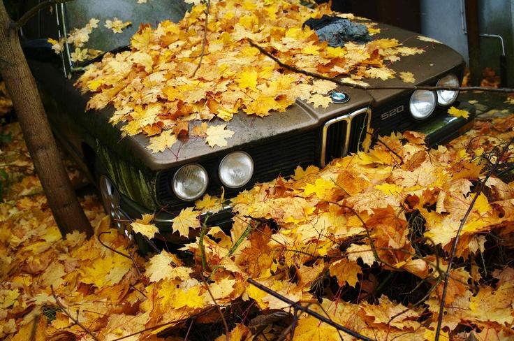 Hojas secas, características del otoño cubren un viejo automóvil BMW en Hanau, al sur de Frankfurt, Alemania. (Foto: REUTERS)