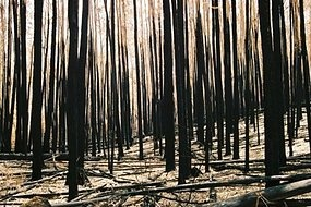The aftermath of a bushfire