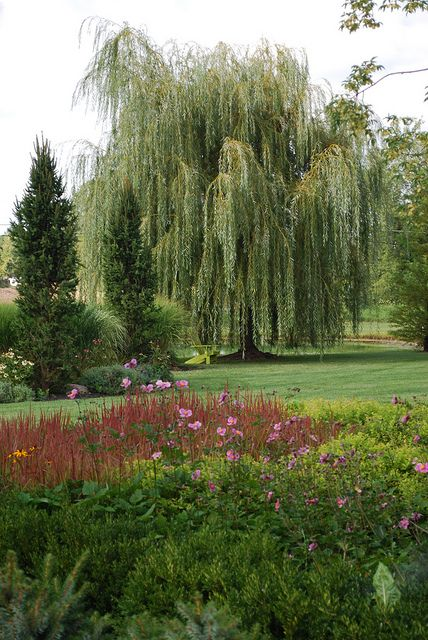 Golden Weeping Willow - when I was little a weeping willow was my favorite place to play....