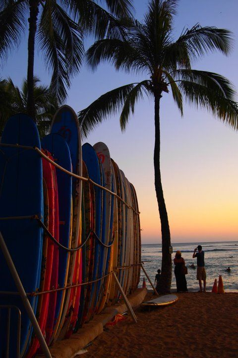 Hawaiian Boards Of Fun