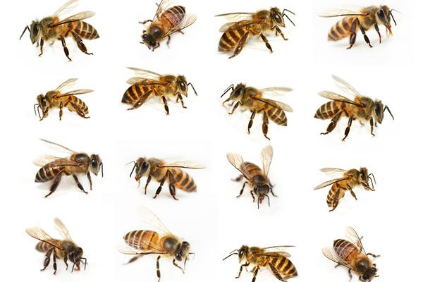 """What Do Bees Look Like? 