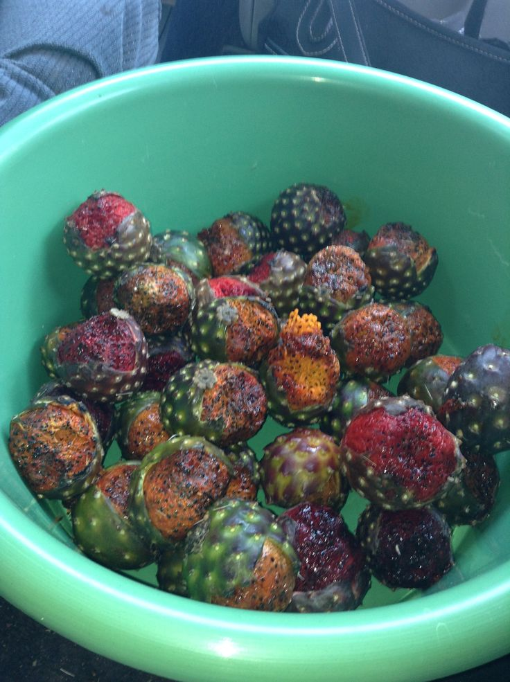 Las Famosas Pitayas De Juchipila ❤ This is a Regional Fruit, and only available once a year