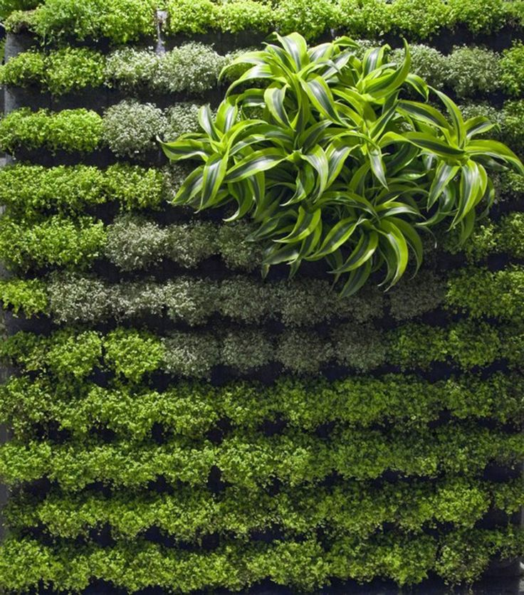 Wall Garden Ideas how to plant a drought tolerant living wall garden Vertical Garden Wall Designs Room Design Ideas