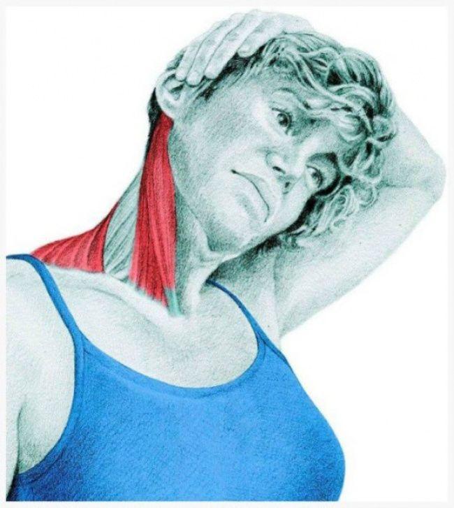 20 изображений для понимания, какие мышцы вы растягиваете