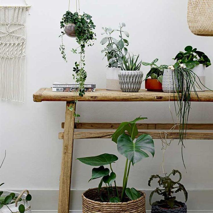 die besten 25 h ngende blument pfe ideen auf pinterest topfpflanzen blumen im blumentopf und. Black Bedroom Furniture Sets. Home Design Ideas