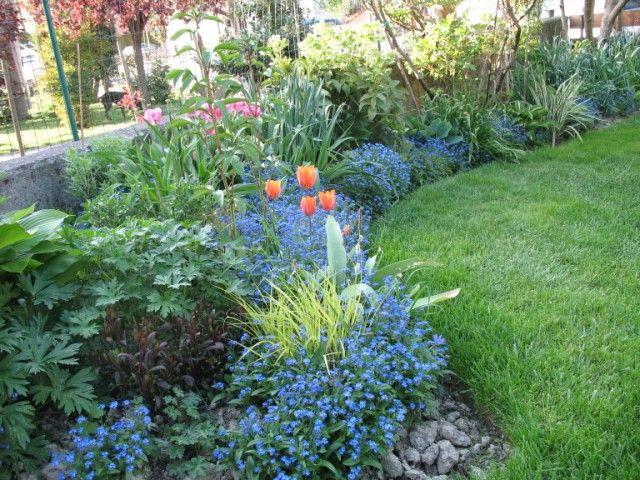 17 migliori idee su piante da ombra da giardino su