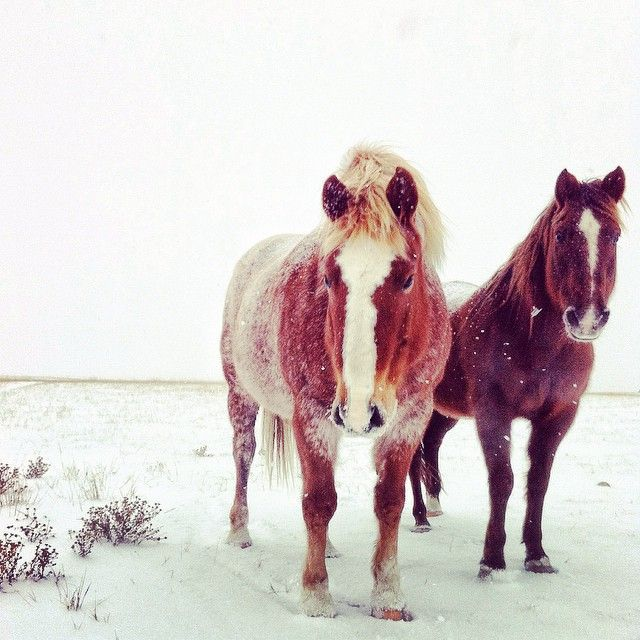 lacey_bear#horses are our only friends in the middle of nowhere #saskatchewan