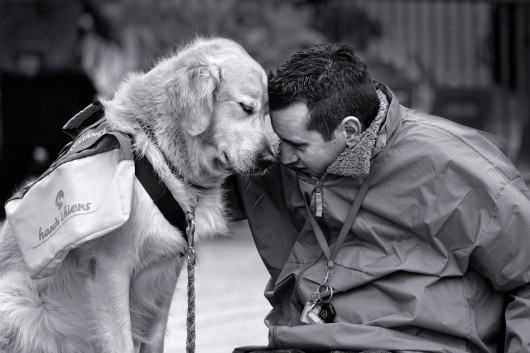 Feel my eternal LOVE human...I only ask for this in return: Dogs Training, Best Friends, Bestfriends, This Men, Warm Fuzzy, Service Dogs, Dogs Behavior, Artists Photography, Work Dogs