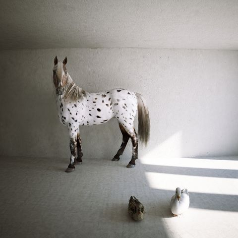 'A horse, a duck and a goose' Computer Generated Image #keremozanbayraktar #art #horse