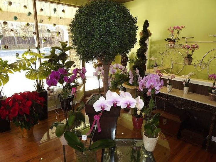One of our past orchid displays. Quill's always stocks a variety of orchids (colors & styles) in our store