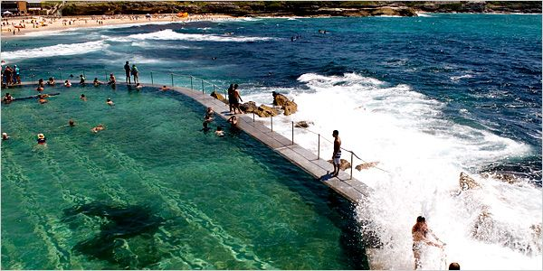 The Bronte Beach rock pool, where you never know with what you're going to be swimming.