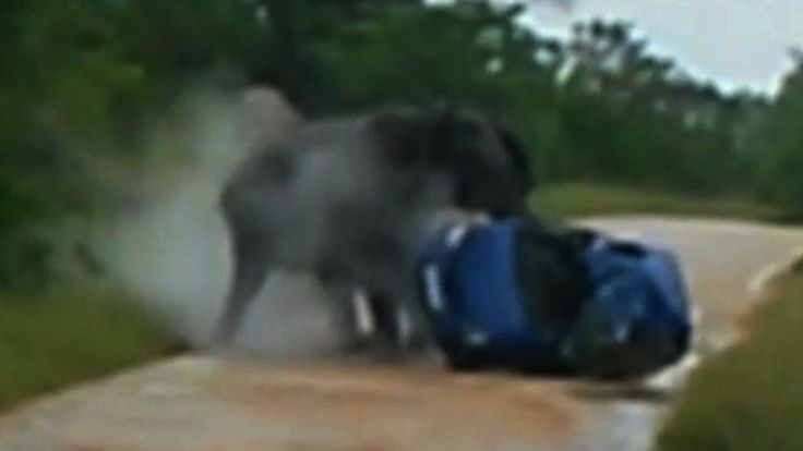 Elephant Rolls Car: Elephant Attack Caught On Camera | Watch the video - Screen India