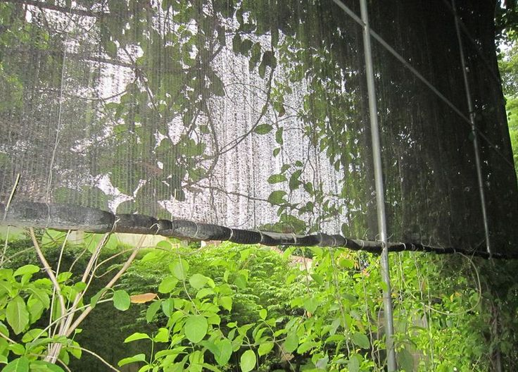 Vines vertically for house air filtration system