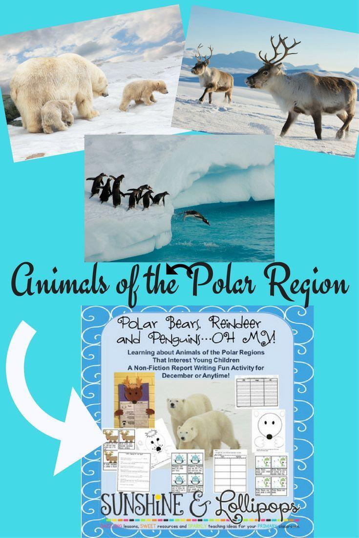 Winter Activities Animals of the Polar Region Polar Bears, Reindeer ...