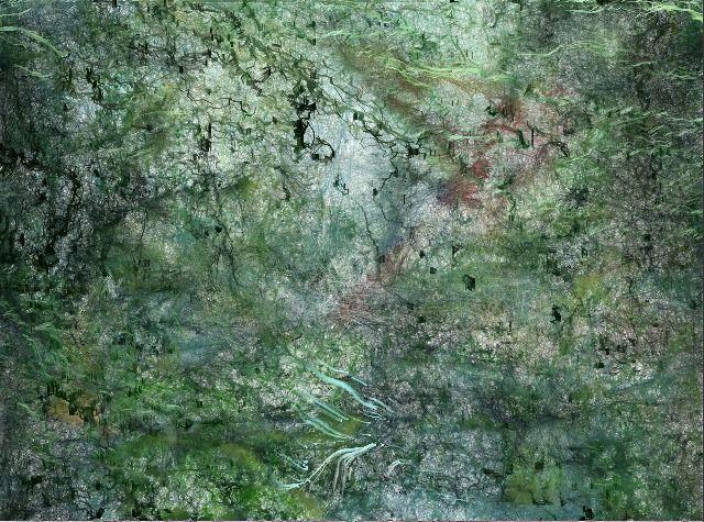 rain_forest.jpg (640×475)