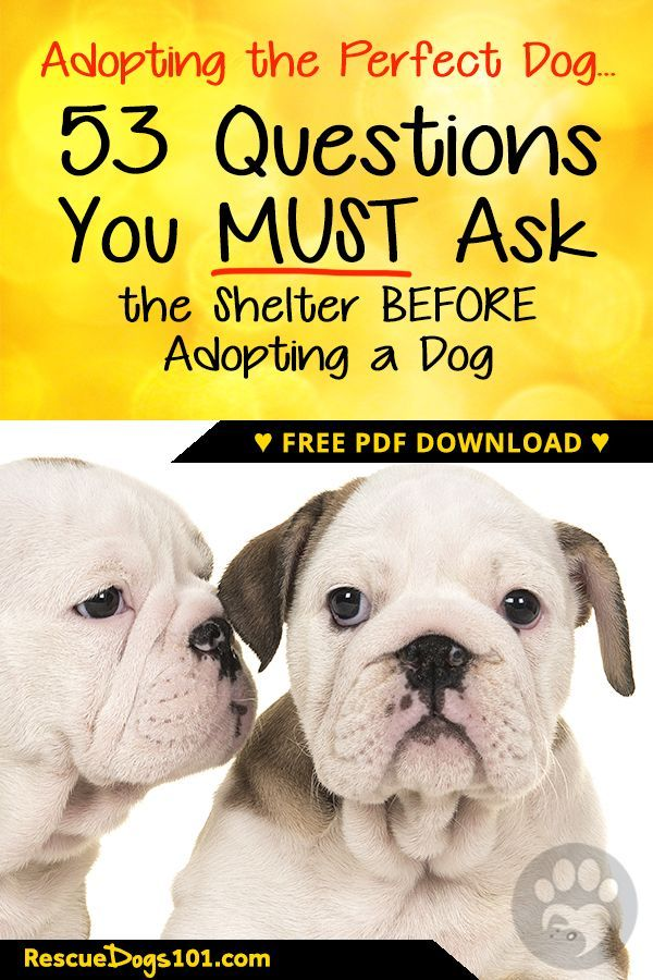 53 Questions You Must Ask The Shelter Before Adopting A Dog Humane Society Dogs Dog Adoption Dogs And Kids