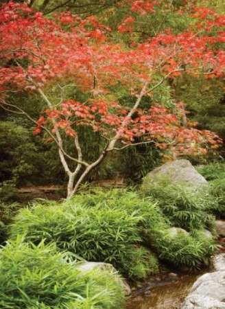 Japanese Park I