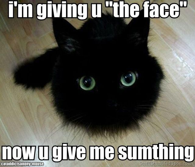 b7eb6e5aaf94246f96309fe1e3cf0a0d the face black kitty 146 best funny cats and memes images on pinterest funny animals
