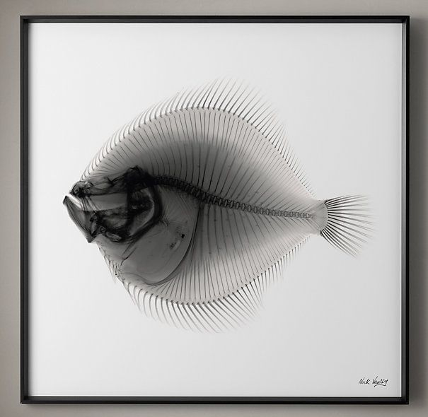 Artist Nick Veasey reveals the inner life of familiar objects through X-ray photographs stunning in their simplicity. His exacting technical process results in pictures that illuminate  in very precise detail.