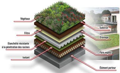 Un schéma reprenant les différentes couches d'une toiture végétalisée.