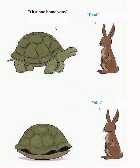 Couldn't help but laugh.Rabbit, Mobiles Home, Really Funny, Funny Bunnies, Funny Pics, Funny Pictures, Mornings Coffe, Humor, Turtles