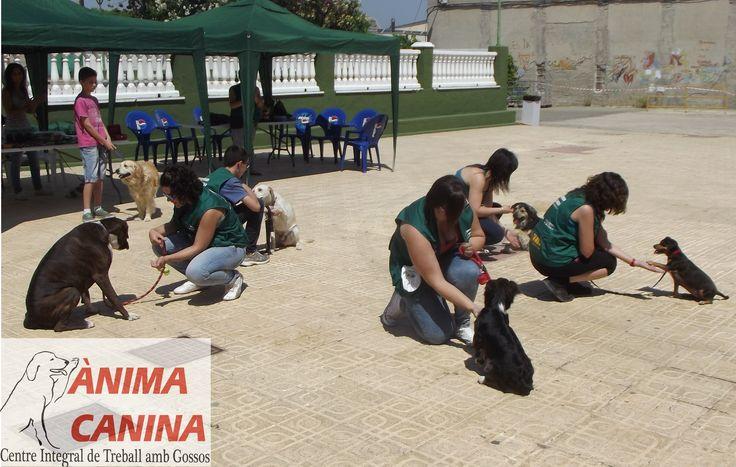 #exhibicioncanina #obedienciacanina #feriaadopciones +somnianimal #colaborandoconprotectoras