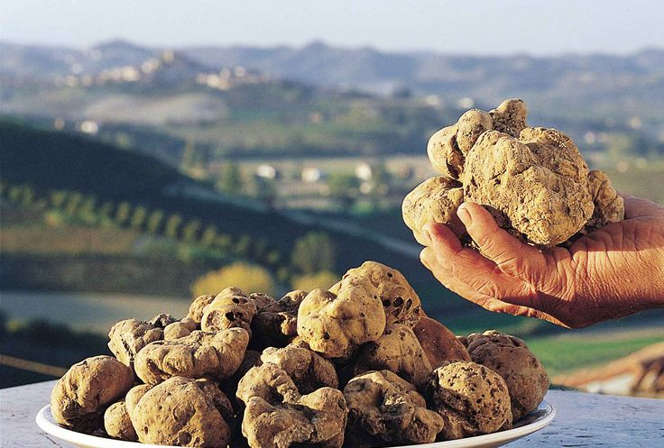 White Alba truffle....the most expensive and luxurious food in the world!