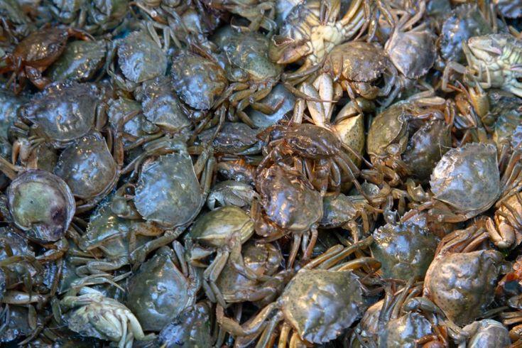 """Femminelle di Orbetello Nella laguna dell'Orbetello esistono molti piatti tipici che recitano: """"Zuppa di femminelle"""", """"Risotto alle femminelle"""", """"Femminelle in umido"""" e via dicendo… ma cosa sono le Femminelle?  Le Femminelle di Orbetello sono dei granchi di laguna (a Venezia li chiamano moleche) che vengono trovati spesso nel periodo Novembre Dicembre nei """"martavelli"""" per la pesca alle anguille. Le femmine sono particolarmente apprezzate in quanto le loro uova fanno si che si possa…"""