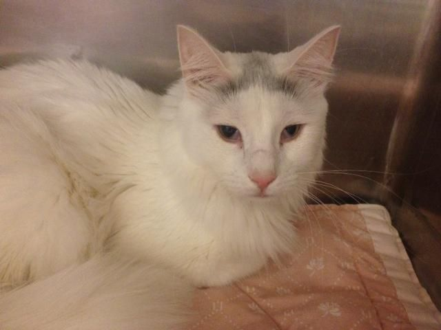 Adoptiere Kelly weiter – Cats need your help!