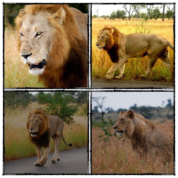 Home 2 The Kruger National Park.