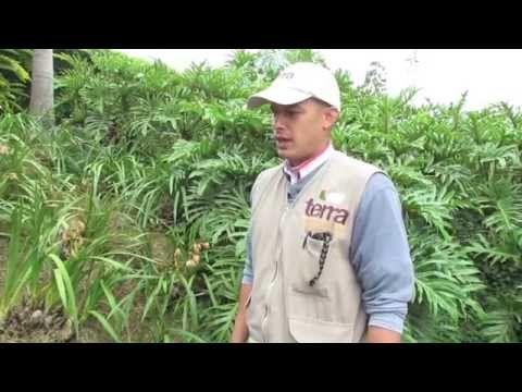 Es importante conocer y saber aplicar los fertilizantes en tu finca, por eso en este corto video te contamos un poco más sobre este importante tema. Cuenta con #TerraPyJ #ServiciosTerraPyJ Llámanos al tel:(4) 3860181 y visita nuestra página web: www.terra.net.co youtu.be/bNS6Ry8jP6E