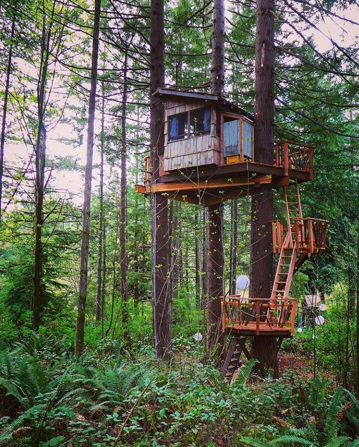 1000+ Ideas About Tree House Masters On Pinterest