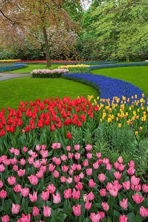Nature Colorful Garden Flowers