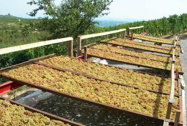 Piccolo Mondo : Moscato passito della Valle Bagnario di Strevi pre...